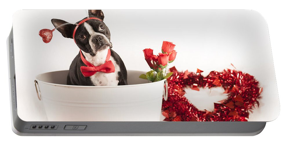 Boston Terrier Portable Battery Charger featuring the photograph Boston Head Gear by Eric Chegwin