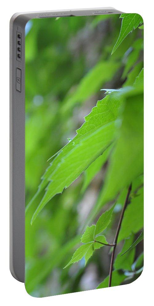 Boston Ivy Portable Battery Charger featuring the photograph Boston Ivy Bokeh by Pamela Smale Williams