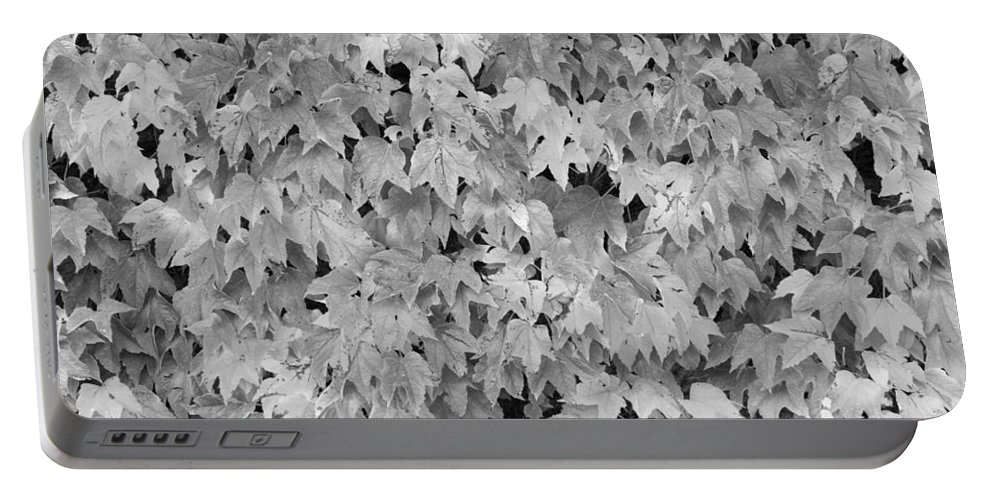 Boston Ivy Portable Battery Charger featuring the photograph Boston Ivy In Monochrome by Semmick Photo