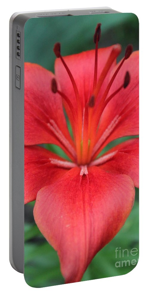 Portable Battery Charger featuring the photograph Botanical Beauty 2 by Jennifer E Doll
