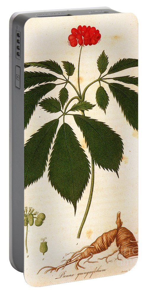 1810s Portable Battery Charger featuring the photograph Botany: Ginseng by Granger