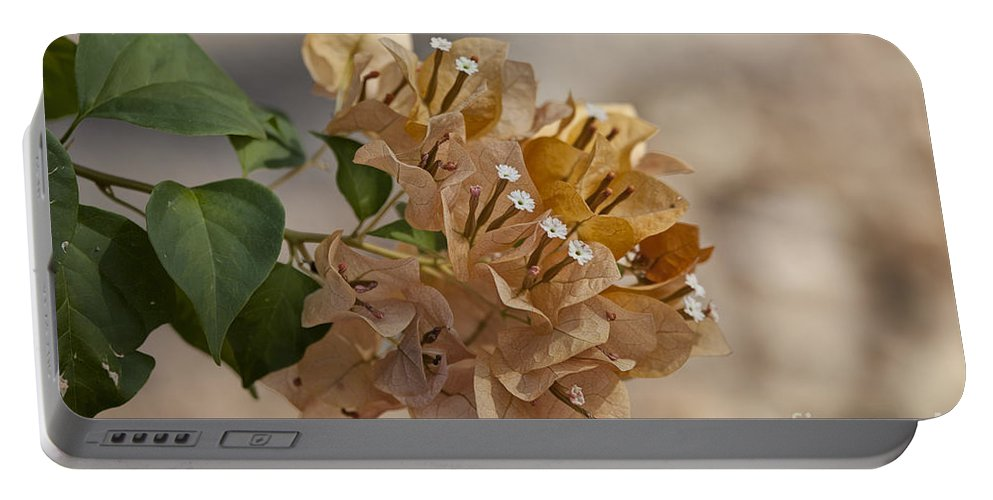 Bougainvillea Portable Battery Charger featuring the photograph Bougainvillea Flowers by Douglas Barnard