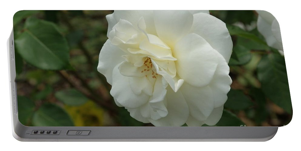 Big Portable Battery Charger featuring the photograph Bountiful White Rose... by Rob Luzier