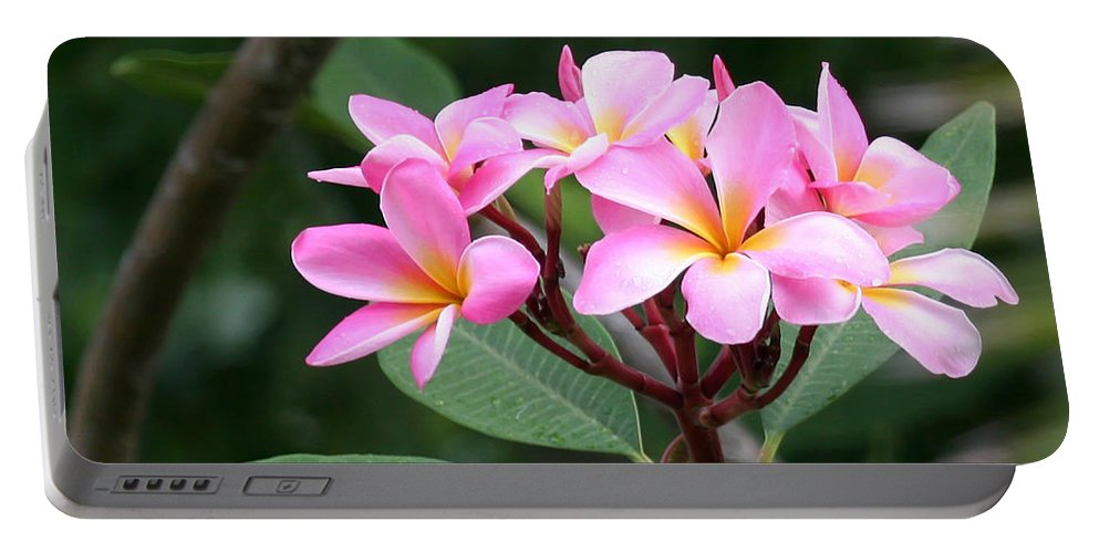 Amazing Portable Battery Charger featuring the photograph Bouquet Of Pink Plumeria by Sabrina L Ryan