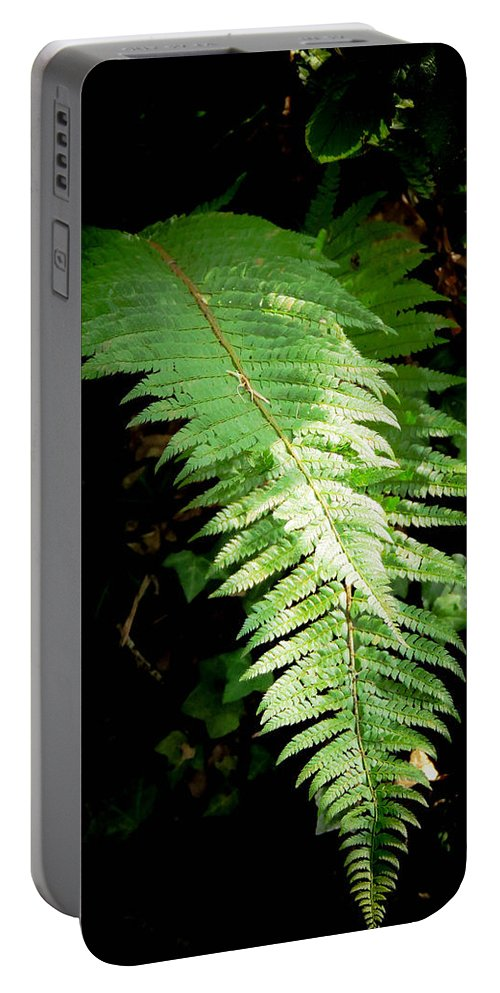 Bracken Portable Battery Charger featuring the photograph Bracken by Tracey Beer