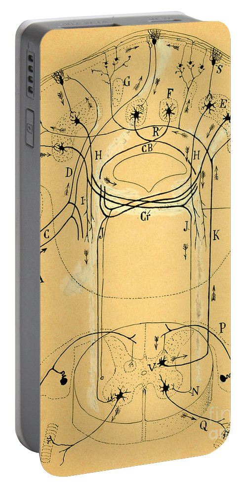 Vestibular Connections Portable Battery Charger featuring the photograph Brain Vestibular Sensor Connections By Cajal 1899 by Science Source