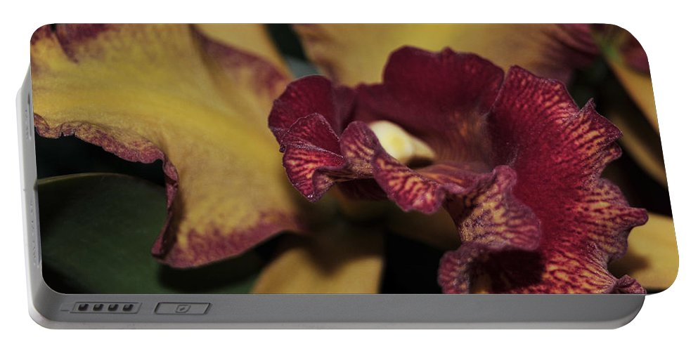 Orchid Portable Battery Charger featuring the photograph Brassolaeliocattleya Melinda Wheeler Halcyon by Terri Winkler