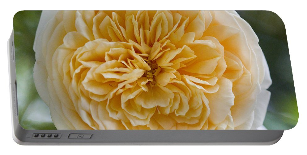 Rose Photographs Portable Battery Charger featuring the photograph Brenda's Garden I by Vernis Maxwell