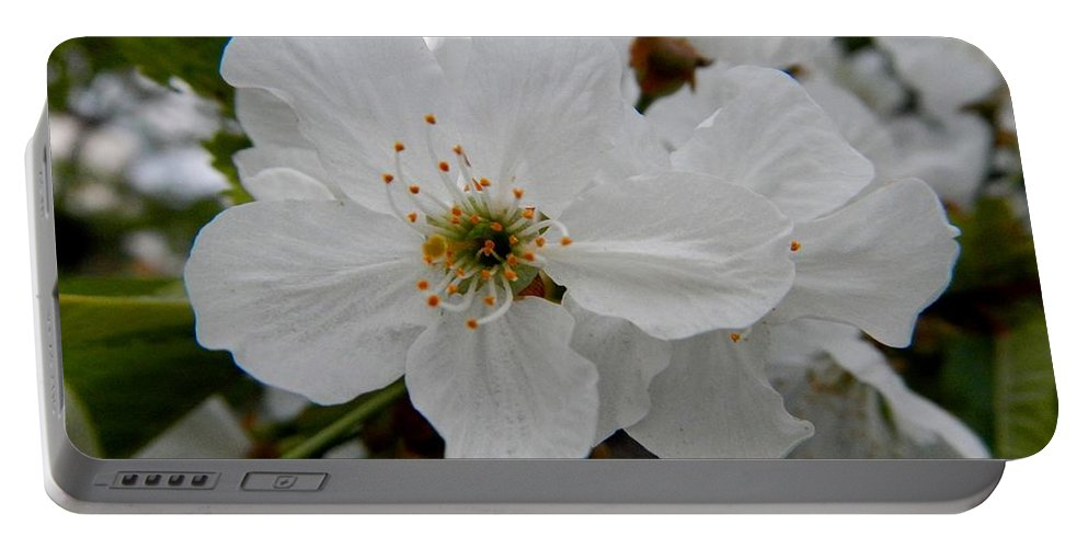 White Blossom Portable Battery Charger featuring the photograph Bride by Loreta Mickiene