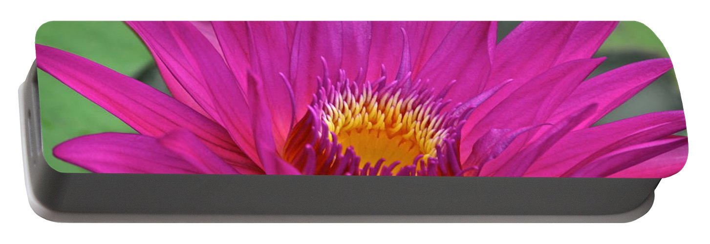 Beauty Portable Battery Charger featuring the photograph Bright Beauty by Frozen in Time Fine Art Photography
