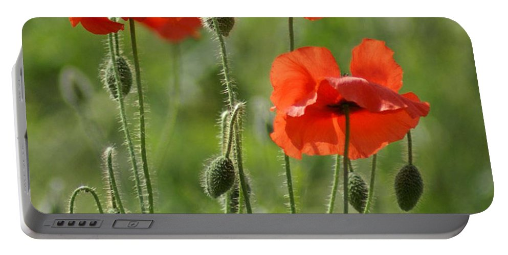 Poppies Portable Battery Charger featuring the photograph Bright Poppies 1 by Carol Lynch