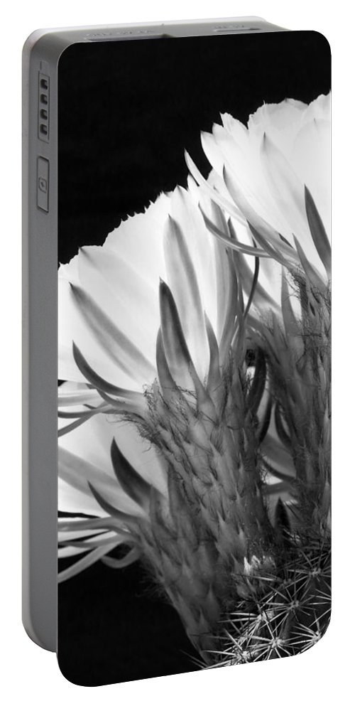 Cacti Portable Battery Charger featuring the photograph Brilliant Blossoms Diptych Left by Kelley King