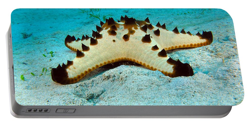 Brittle Portable Battery Charger featuring the photograph Brittle Star Fish by Paul Ranky