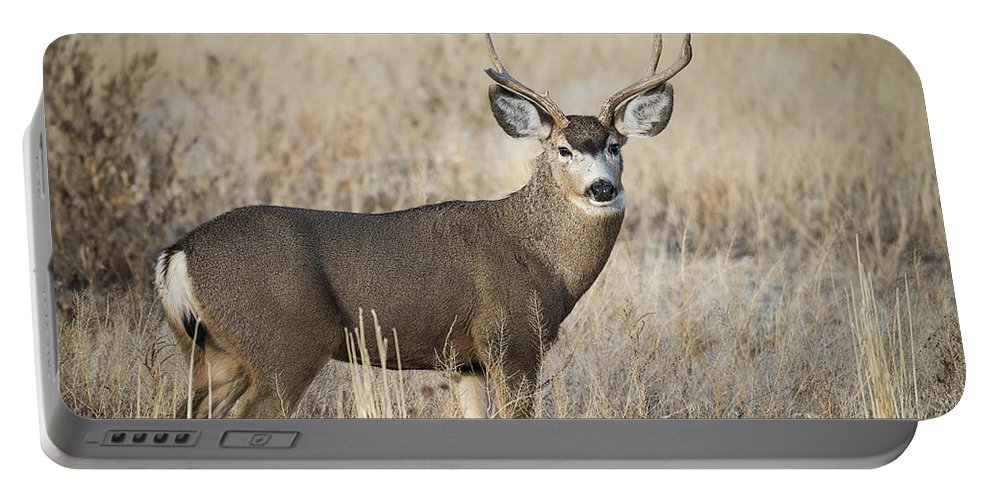 Mule Portable Battery Charger featuring the photograph Broken Antler by Dianne Phelps