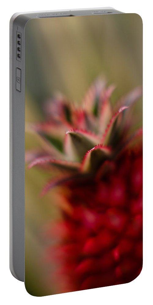 Flower Portable Battery Charger featuring the photograph Bromeliad Crown by Mike Reid