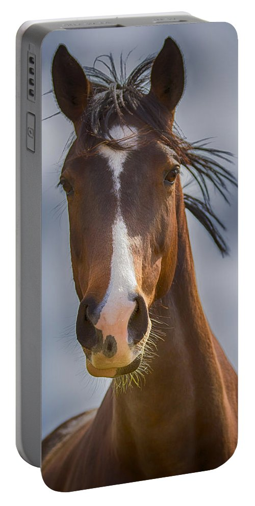 Equestrian Portable Battery Charger featuring the photograph Bronze Beauty by Linda Tiepelman