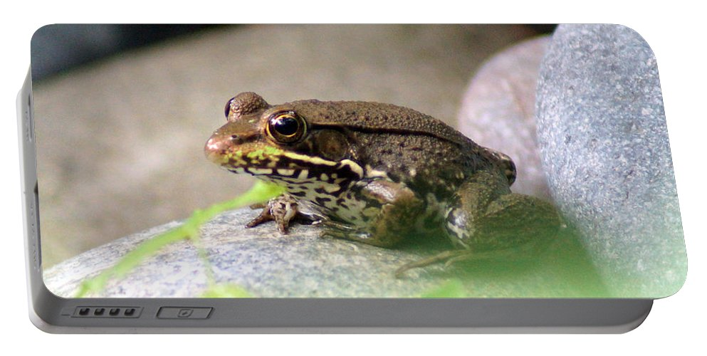 The Bronze Frog Portable Battery Charger featuring the photograph Bronze Frog by Kim Pate