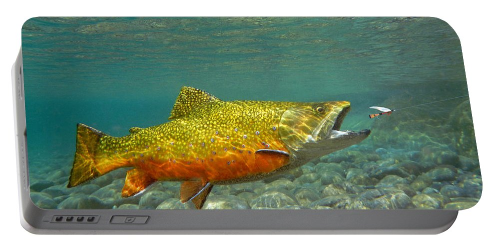 Fish Painting Portable Battery Charger featuring the painting Brook Trout And Coachman Wet Fly by Paul Buggia