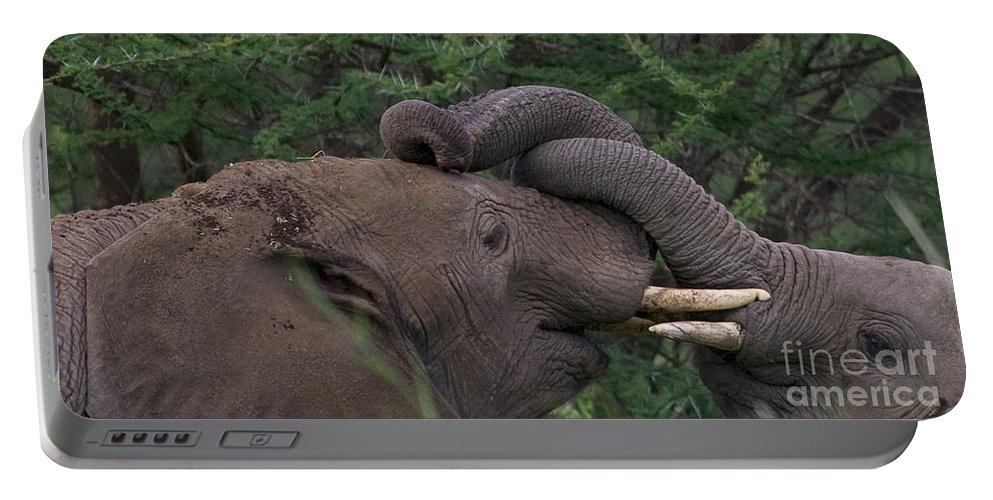 Elephants Portable Battery Charger featuring the photograph Brothers Hugging by J L Woody Wooden