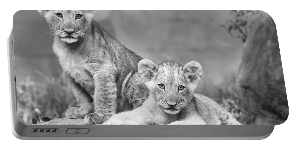 Wildlife Portable Battery Charger featuring the photograph Brothers by Linda D Lester