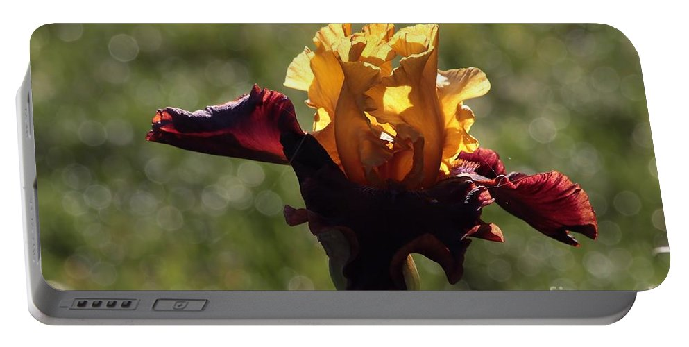 Iris Portable Battery Charger featuring the photograph Brown And Yellow Iris by Kenny Glotfelty