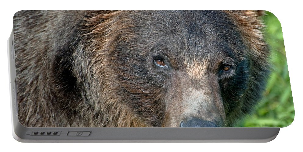 Alaska Portable Battery Charger featuring the photograph Brown Bear by Clint Pickarsky