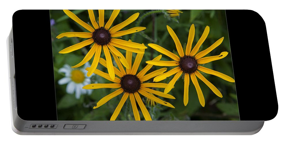 Brown Eyed Susan Portable Battery Charger featuring the photograph Brown Eyed Girl by John Stephens