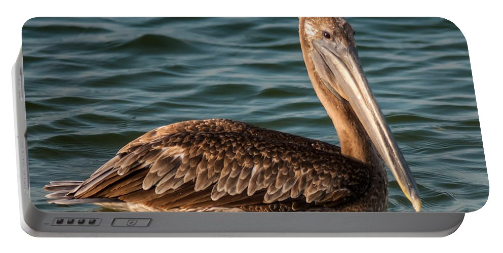 American Portable Battery Charger featuring the photograph Brown Pelican by Alex Grichenko
