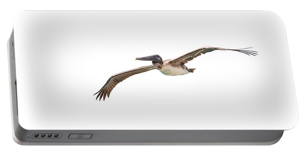 Birds Portable Battery Charger featuring the photograph Brown Pelican On White by John M Bailey