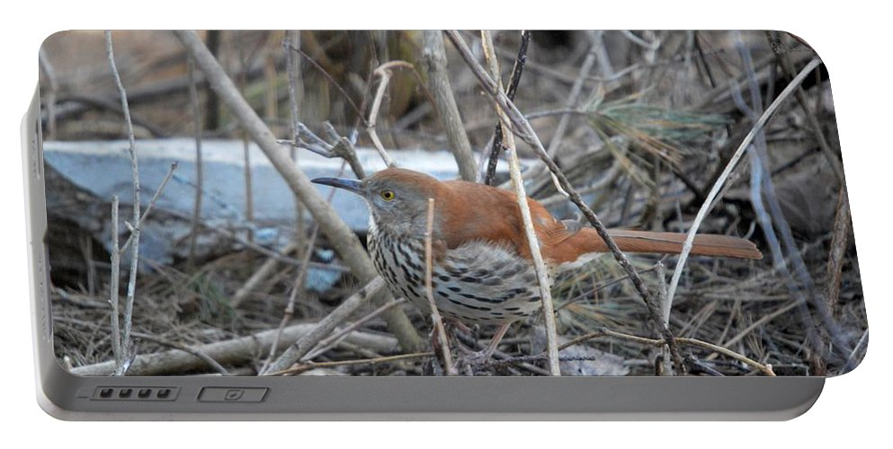 Wild Bird Portable Battery Charger featuring the photograph Brown Thrasher by Thomas Phillips