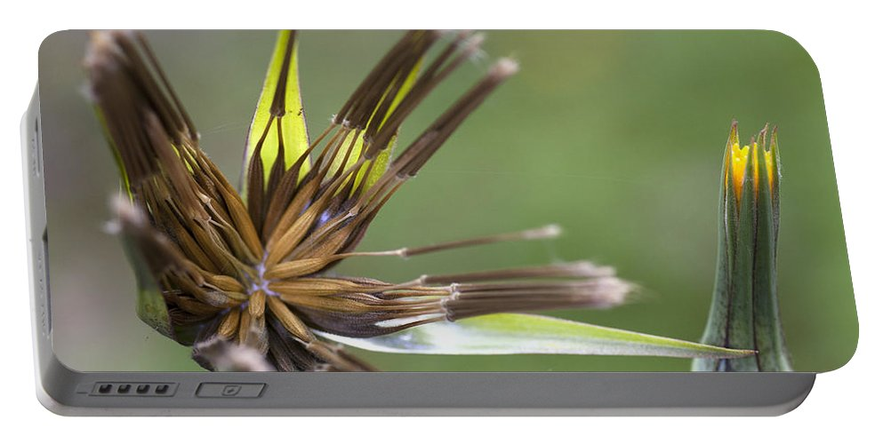 Flower Portable Battery Charger featuring the photograph Bud Star by Richard Thomas