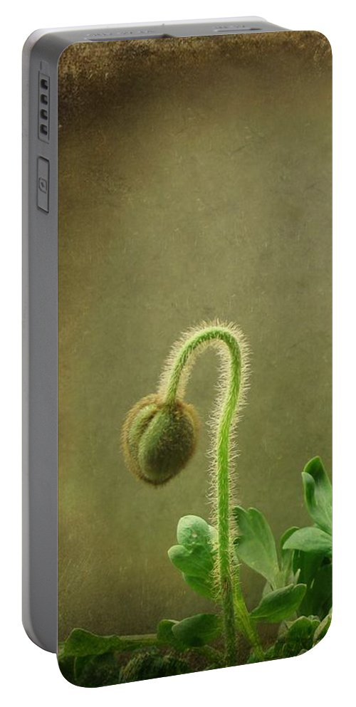 Flower Buds Portable Battery Charger featuring the photograph Buds by Gothicrow Images