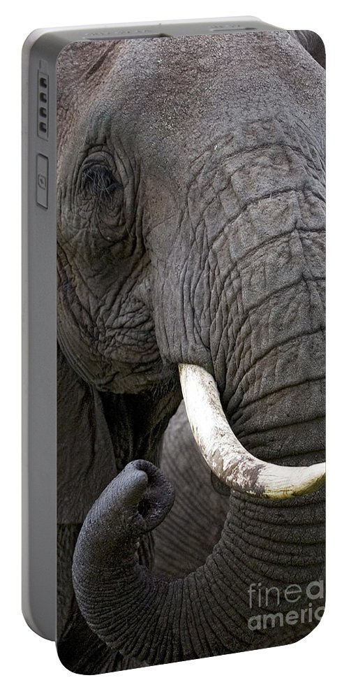Elephantidae Loxodonta Africana Portable Battery Charger featuring the photograph Bull Elephant by J L Woody Wooden