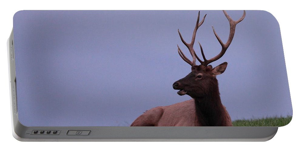 Elk Portable Battery Charger featuring the photograph Bull Elk At Dusk by Bruce J Robinson