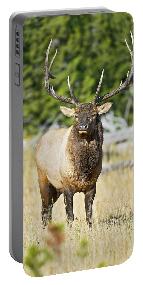 Bull Portable Battery Charger featuring the photograph Bull Elk IIII by Gary Langley
