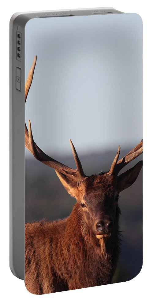 Elk Portable Battery Charger featuring the photograph Bull Elk Portrait by Bruce J Robinson