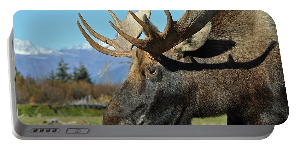 Alaska Portable Battery Charger featuring the photograph Bull Moose Profile by Clint Pickarsky