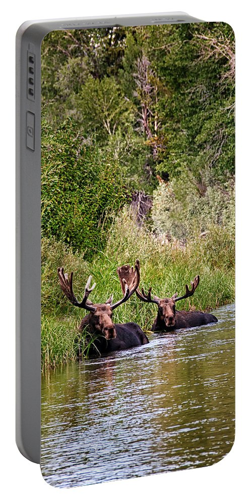 Moose Portable Battery Charger featuring the photograph Bull Moose Summertime Spa by Timothy Flanigan
