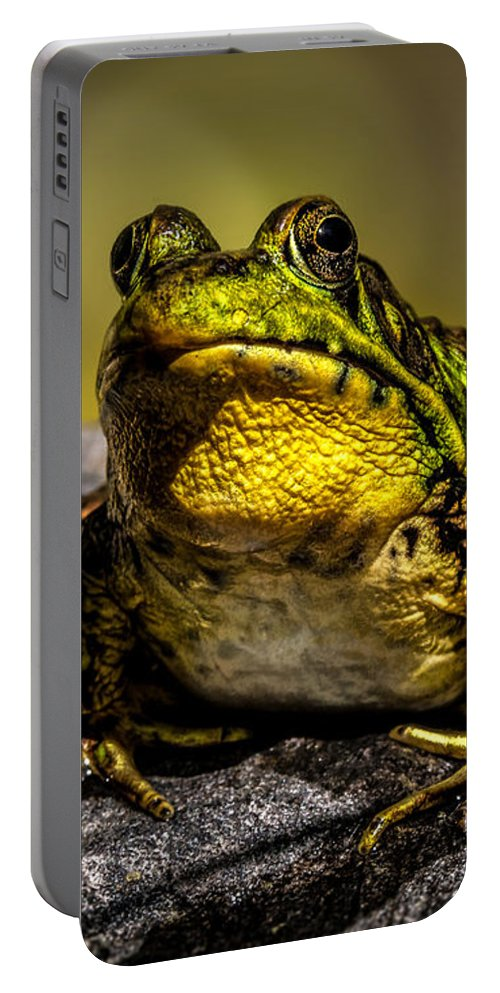 Frog Portable Battery Charger featuring the photograph Bullfrog Watching by Bob Orsillo