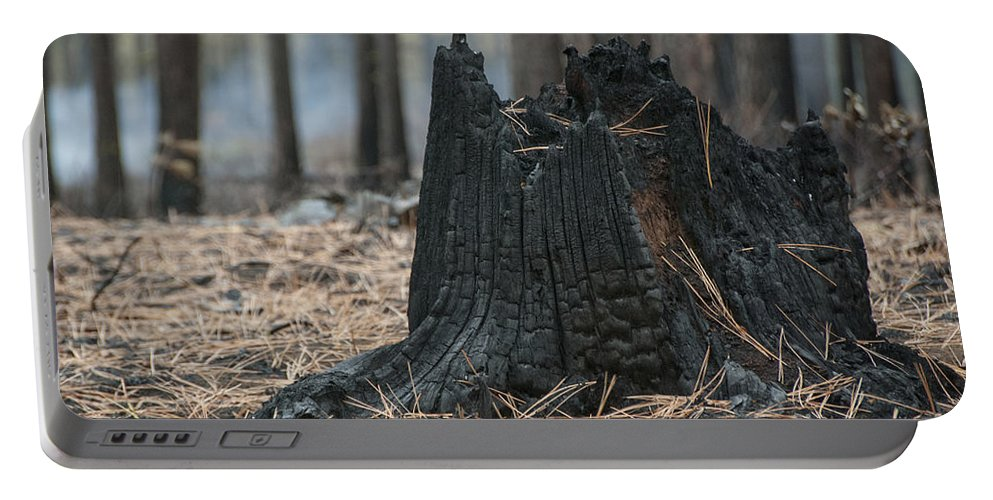 Beauty In Nature Portable Battery Charger featuring the photograph Burnt Tree Trunk by Juli Scalzi