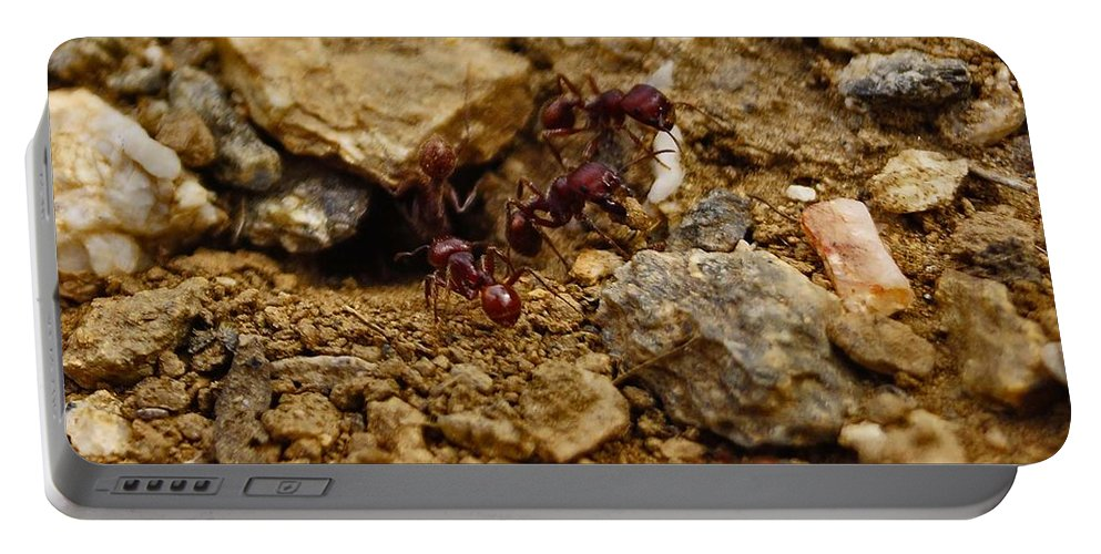 Ants Portable Battery Charger featuring the photograph Busy Work by Patrick Moore