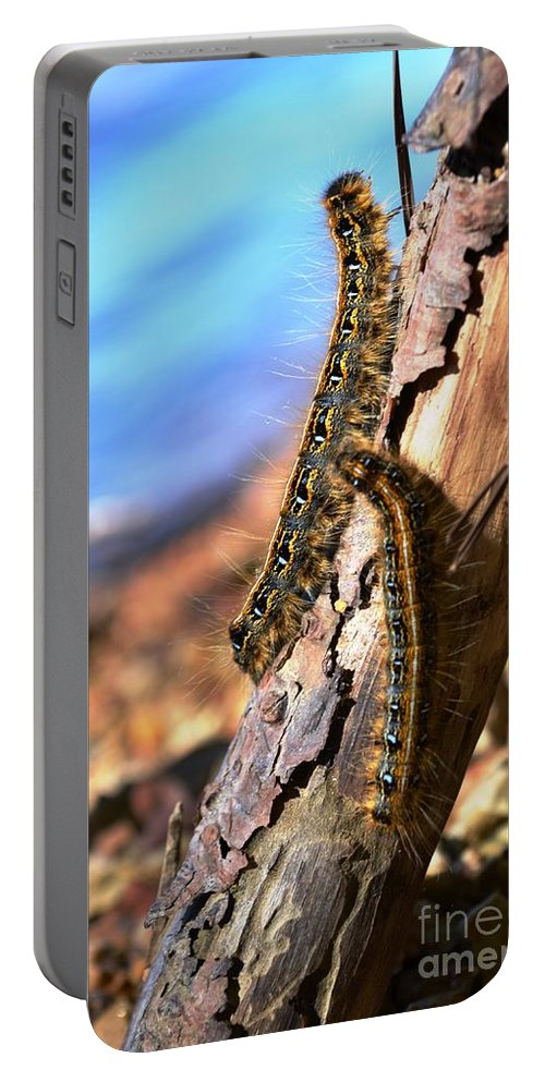 Caterpillars Portable Battery Charger featuring the photograph Butterflies In The Making by Deanna Cagle