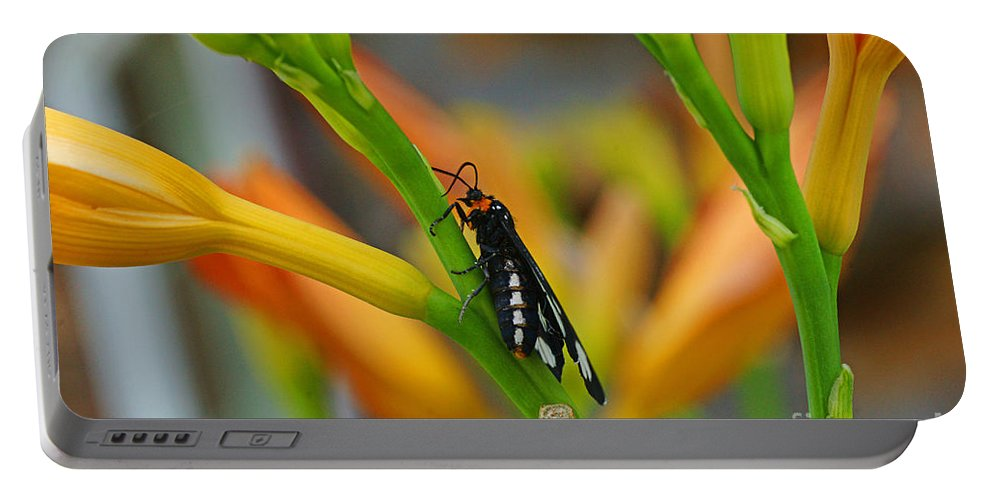 Butterflies Portable Battery Charger featuring the photograph Butterfly An3598-13 by Randy Harris