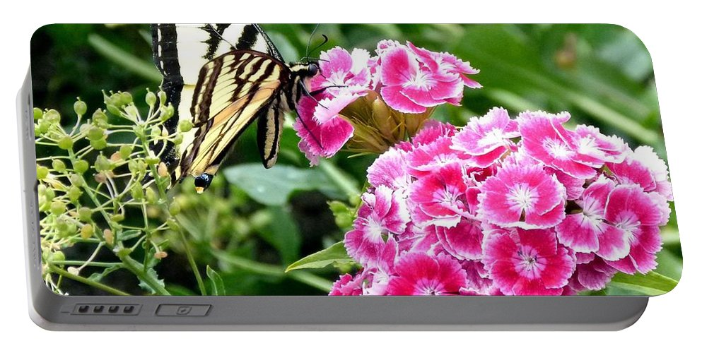Butterfly Portable Battery Charger featuring the photograph Butterfly And Sweet Williams by Will Borden