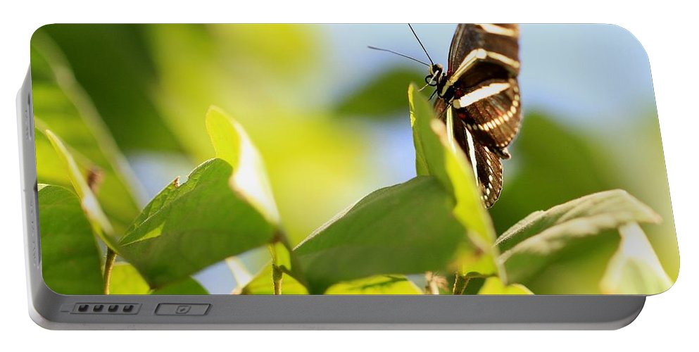 Arizona Portable Battery Charger featuring the photograph Butterfly by Ashley M Conger