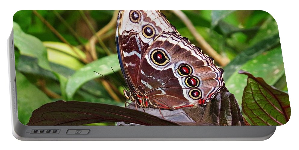 Blue Morpho Butterfly Portable Battery Charger featuring the photograph Butterfly Beauty by MTBobbins Photography