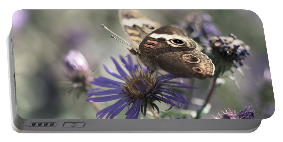 Butterfly Portable Battery Charger featuring the photograph Butterfly In Pastel - Buckeye On Asters by Jane Eleanor Nicholas