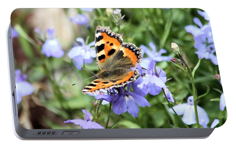 Butterfly Portable Battery Charger featuring the photograph Butterfly On Blue Flower by Gordon Auld