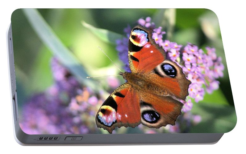 Butterfly Portable Battery Charger featuring the photograph Butterfly On Buddleia by Gordon Auld