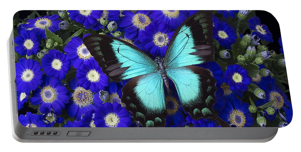 Cineraria Portable Battery Charger featuring the photograph Butterfly On Cineraria by Garry Gay